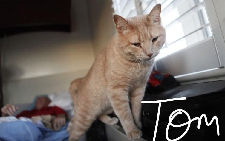 Tom a hospice cat