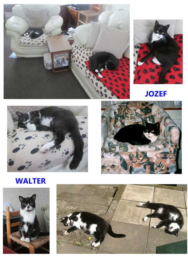 "Walt and jozef cats living in the same home"" width"