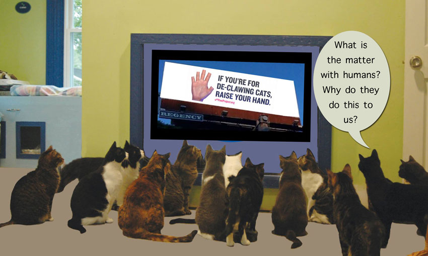 Declawing cats: What is the matter with humans?