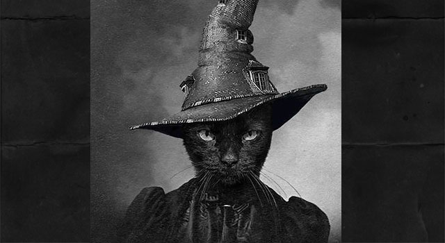Witchcraft and cats