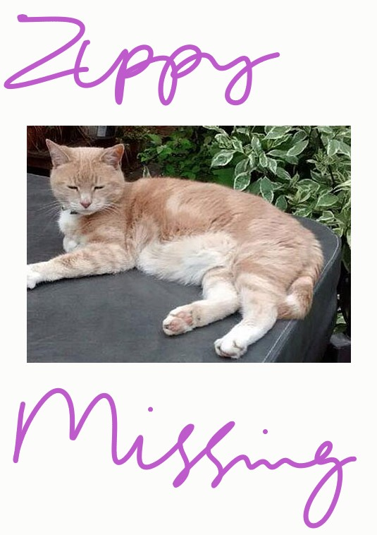 Zippy cat missing since June 2014