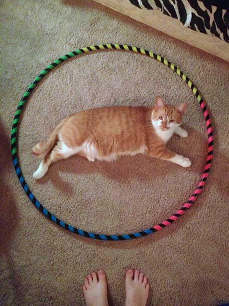 Cat in circle