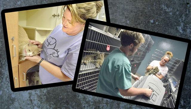 Catawba animal shelter I believe