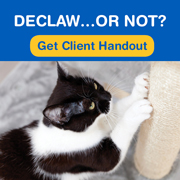 AVMA policy on declawing