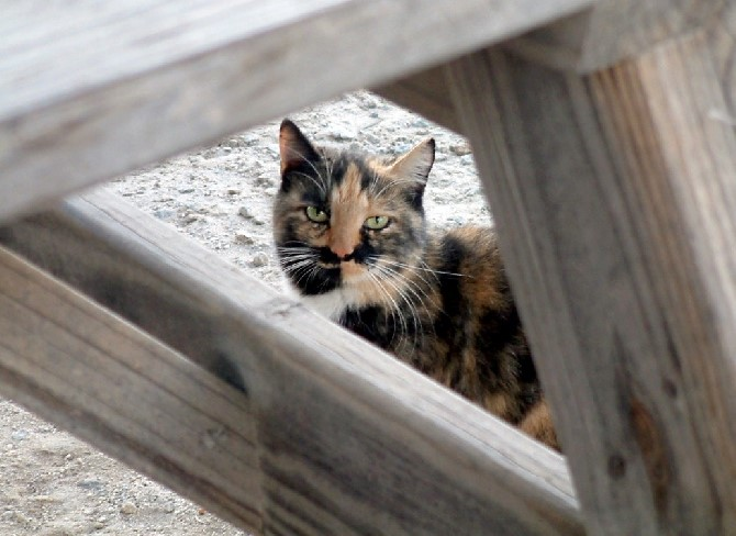 Are feral cats being illegally killed at shelters