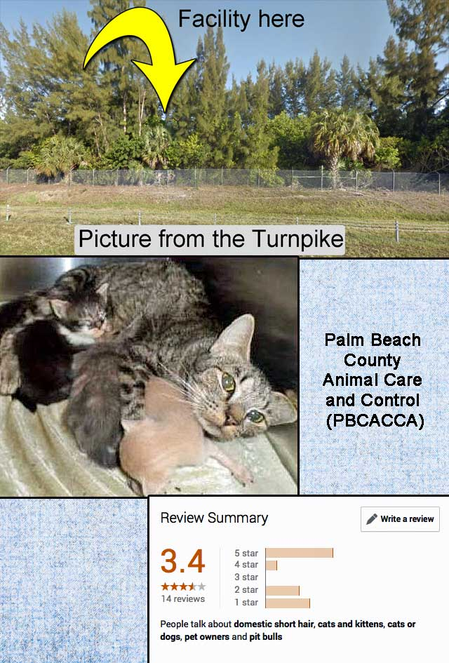 Palm Beach County Animal Care and Control PBCACCA