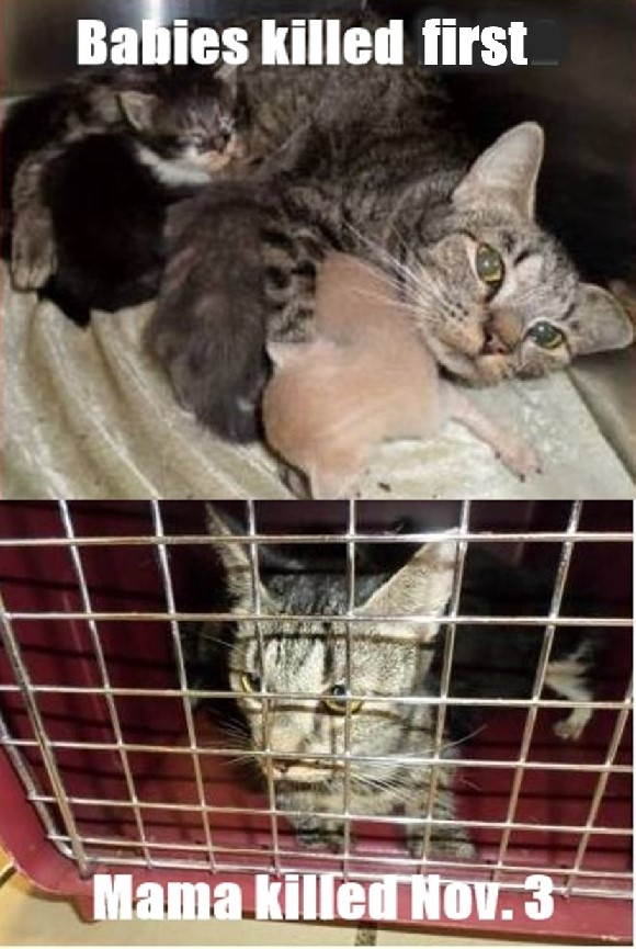 Palm Beach cats killed a shelter