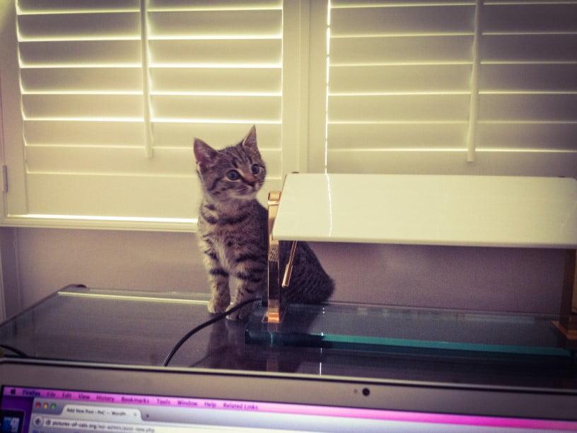Gabriel a semi-feral cat