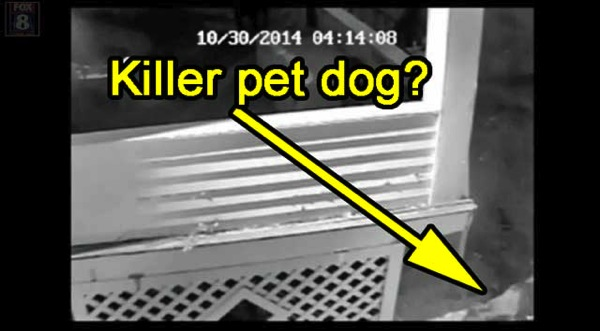 Killer pet dog