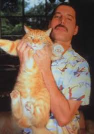 Freddie Mercury loved cats