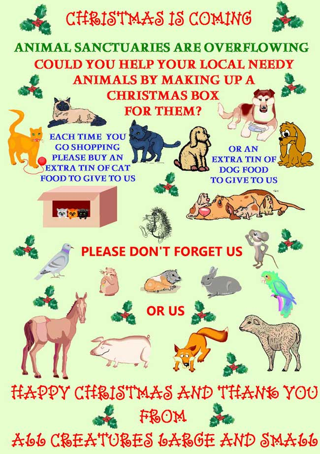 Please be generous to cats at Christmas