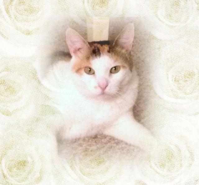 Rescue cat Kitkat