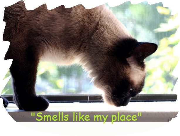 Cat smells we remove from our home