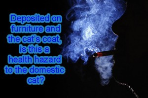 Third-hand cigarette smoke and cat health