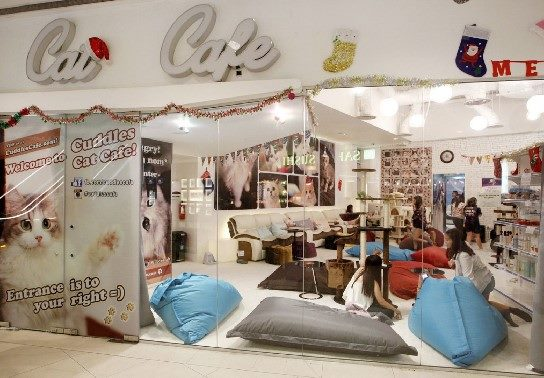Cuddles cat cafe in Singapore has a cat problem