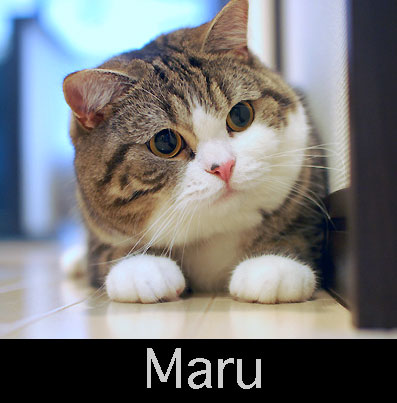 Portrait of Maru from Indonesian Wikipedia