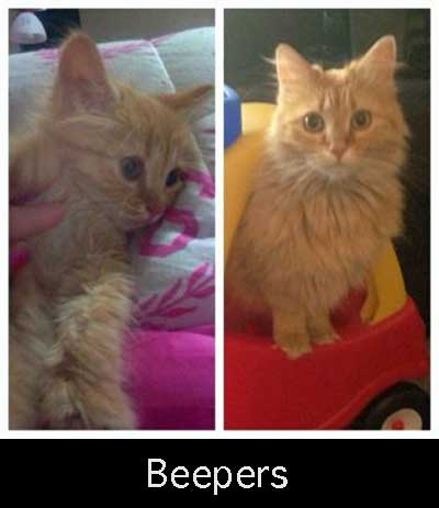 Beepers a cat rescued through love and hope