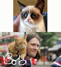 Celebrity Cats: One celebrates, while the other exploits, the cat