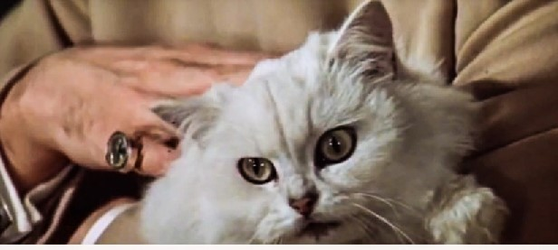 What Cat Breed Will Feature In The New James Bond Movie
