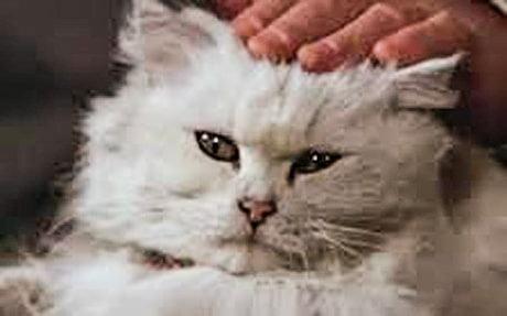 Blofeld's Persian cat