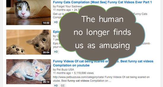 Image of: Animal Funny Cat Video Popularity In Decline Image Wallpapers Hd Popularity Of Cat Videos Declining