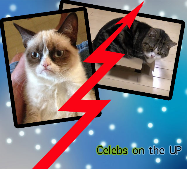 Celebrity Cats on the UP and UP