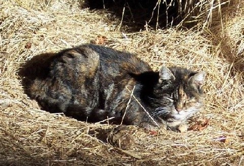 Farm cats are exposed to possible pseudorabies infection