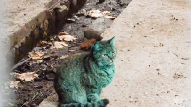 Green cat in Varna Bulgaria