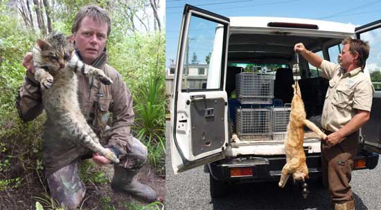 Killing feral cats in NZ (pest control)