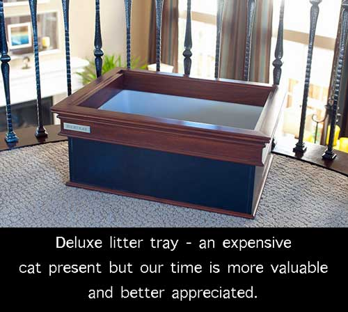 Luxury litter box for a domestic cat