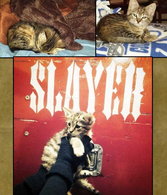 Slayer band rescue a freezing kitten