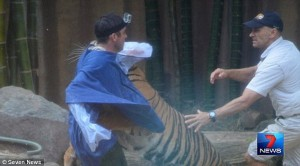 Tiger handler bitten by tiger