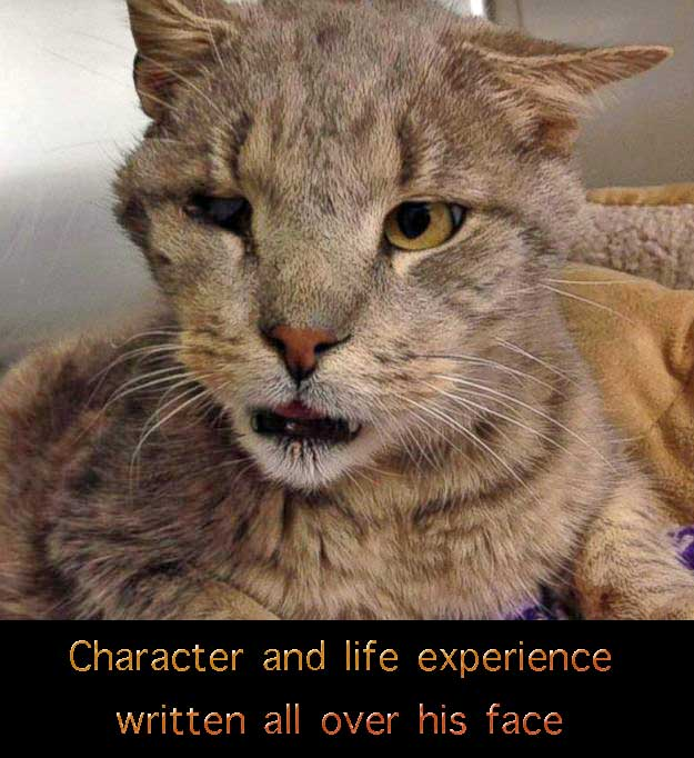 "Zeb - the so called ""ugly"" yet attractive 12 year-old rescue cat"