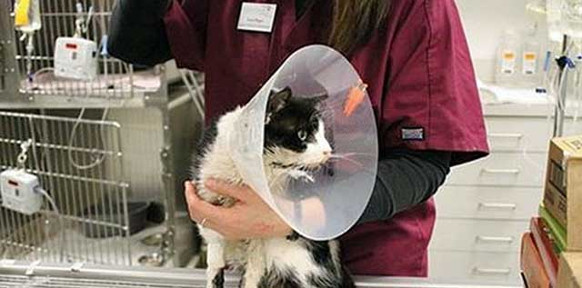 Bart a cat who was inadvertently buried alive after being hit by a car