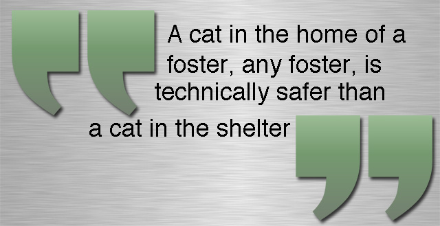 Cat fostering is safer than a cat rescue