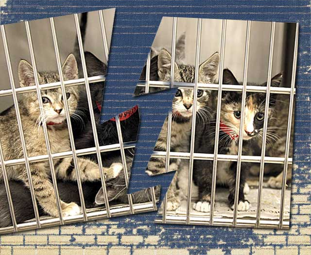 Cat Rescue Crumbles Hurting Fosters