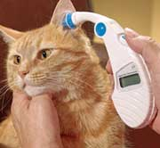 Checking cat ear canal temp.