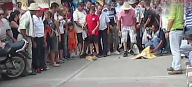 Columbia cat race - cruelty and abuse