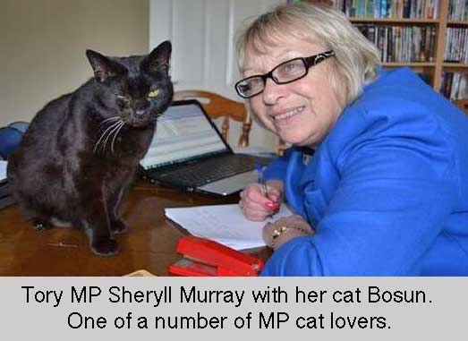 Cats Protection Manifesto for 2015 election
