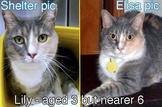 Do shelter staff underestimate cat ages