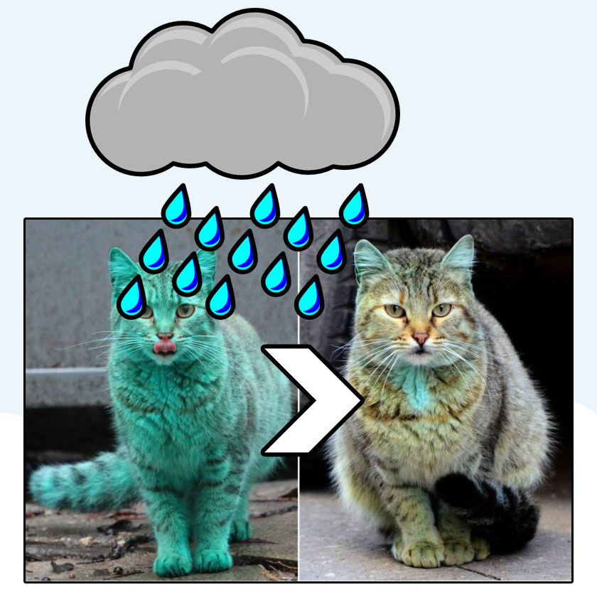 Bulgaria's green cat washed by rain
