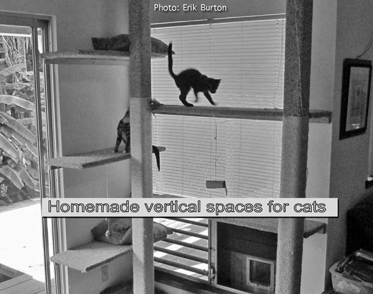 Vertical space for cats