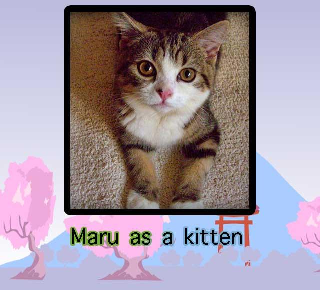 Maru as a kitten