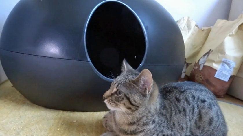 Poopoopeedo cat litter box (and Gabriel)