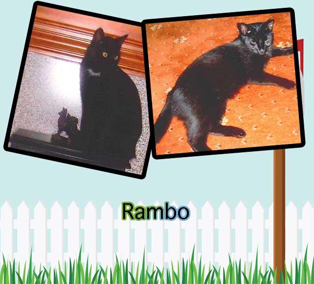 Rambo or Butch