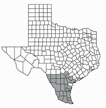 Where ocelot could be found in Texas