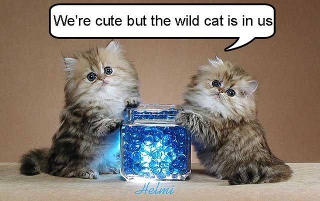 AHHD cats