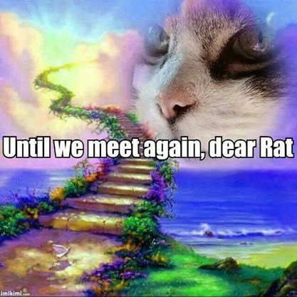 In memory of a cat named Rat