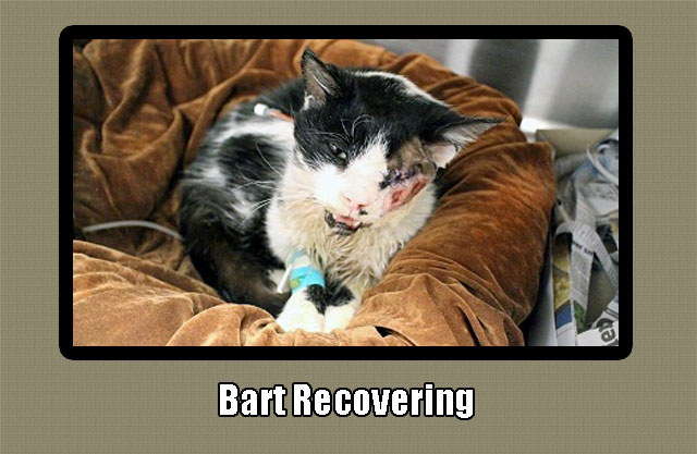 Bart Zombie Cat recovering