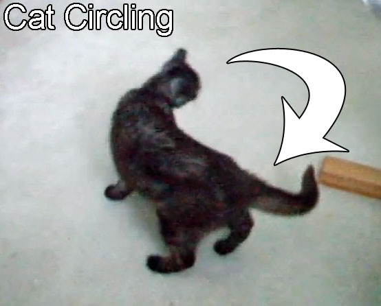 Cat Circling Causes